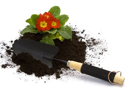 Springtime. Gardening tools, colorful primula and soil. photo