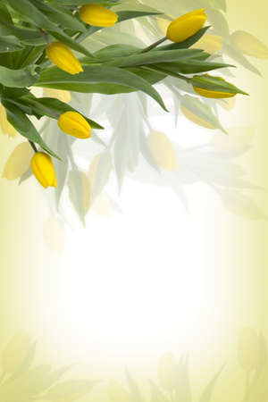 Yellow tulips background with free space for text photo
