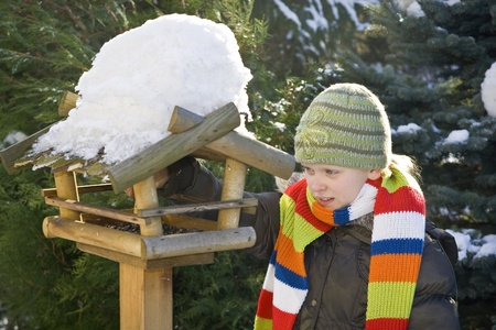 bird feeder: Wooden feeder for birds in snowy garden