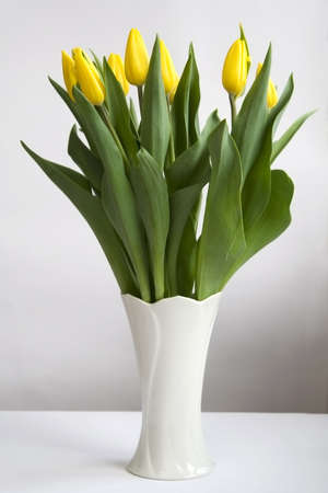 florero: Manojo de tulipanes amarillos en el florero blanco
