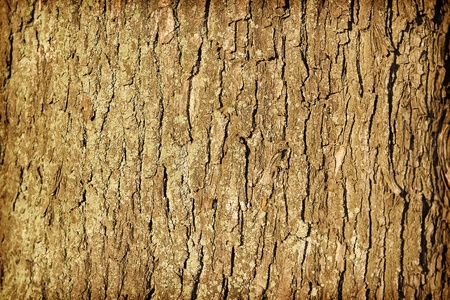 Background. The coarse texture of tree bark