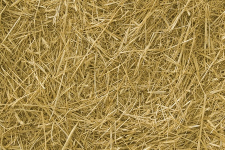 Background. The natural texture of dry straw photo