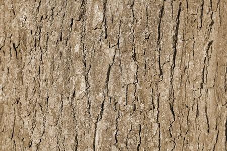 Background. The coarse texture of tree bark photo