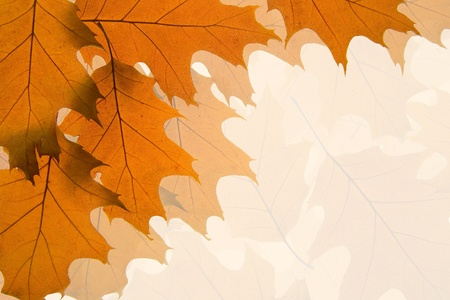 Bakground made of autumn brown and orange leaves photo