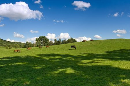 Horses grazing in the meadow hill