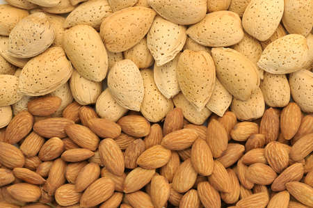 A row of peeled almonds and one of almonds in shell