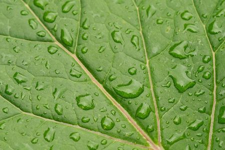 green leaf close-up with water drops