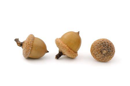 Close-up of three dried acorns on white background Stock Photo