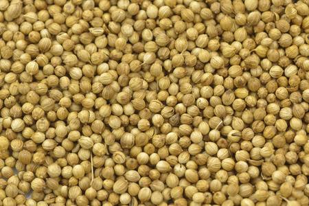 coriander seeds isolated