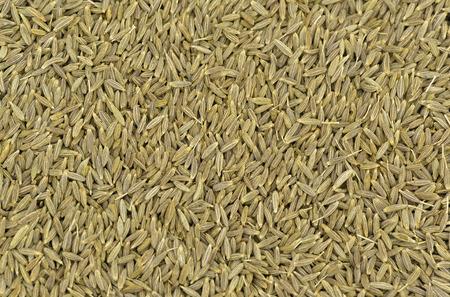 Clos-up of cumin seeds of cumin at studio