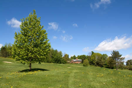 green lines: Aspen tree in a field on a spring sunny day Stock Photo