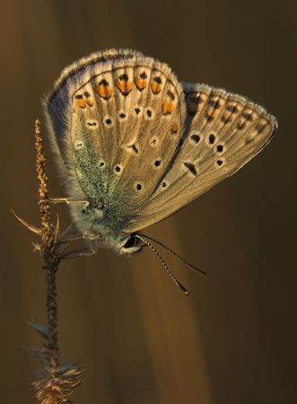 however: Peeping of butterflies is an interesting hobby, however heshe demands the great perseverance and the patience
