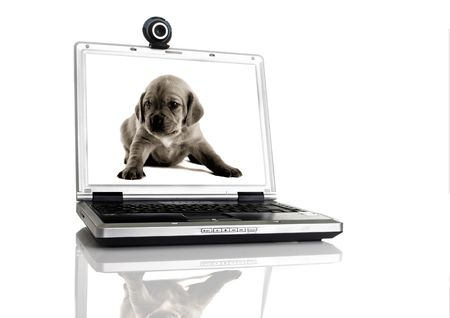 msn: Laptop with a webcam over the table with a image of a pupie on the screan Stock Photo