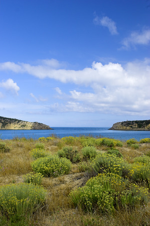 seacoast: Beautiful blue bay with green bushes in the dunes