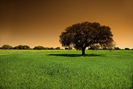 Landscape with a tree and  a beautiful sky with a orange gradient photo