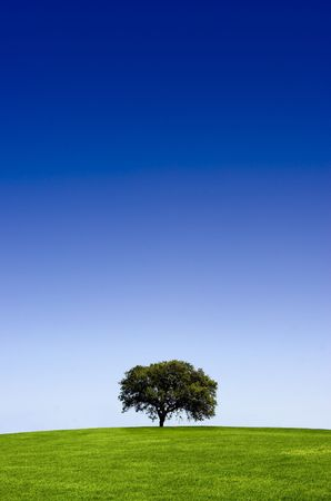 Green landscape with a tree and  a beautiful blue sky  photo