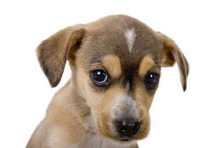 mirada triste: Primer plano de un lindo perrito con una mirada triste Foto de archivo