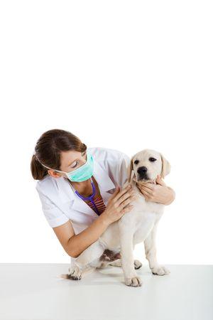 perro labrador: Toma de veterinario femenina joven cuidado de un hermoso perro labrador
