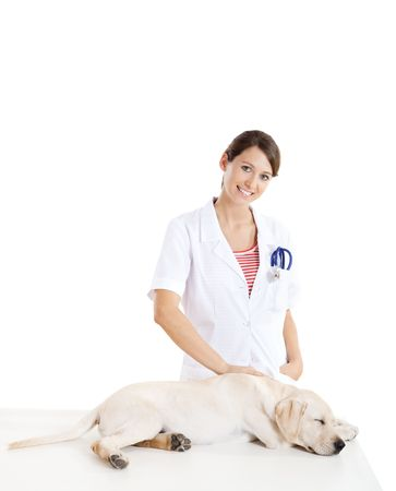 Young female veterinary taking care of a beautiful labrador dog photo