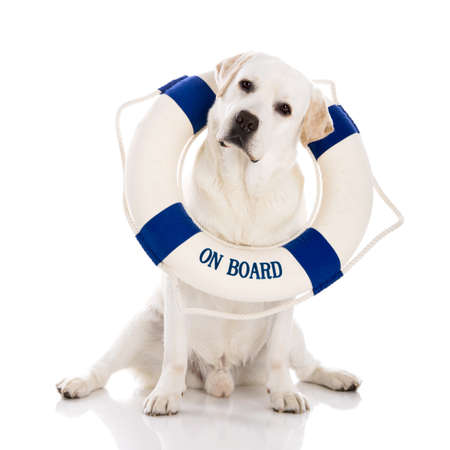 Beautiful labrador retriever sitting on floor with a sailor buoy photo