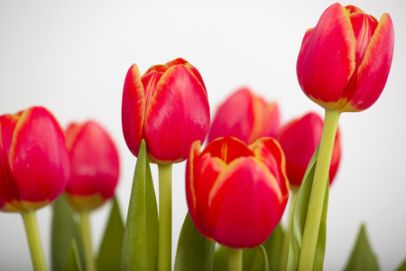 arrangment: Beautiful arrangement of orange tulips isolated on white