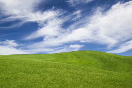 grassy field: Beautiful landscape with an amazing blue sky and white clouds