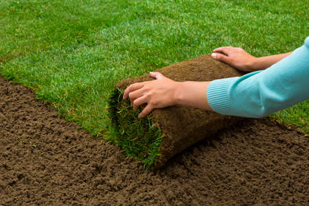 sod: Woman applying turf rolls in the backyard
