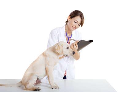 perro labrador: J�venes tomando veterinario femenina cuidado de un hermoso perro labrador