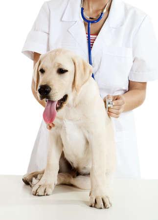 veterinario: J�venes mujeres veterinarios cuidan de un lindo hermoso perro  Foto de archivo