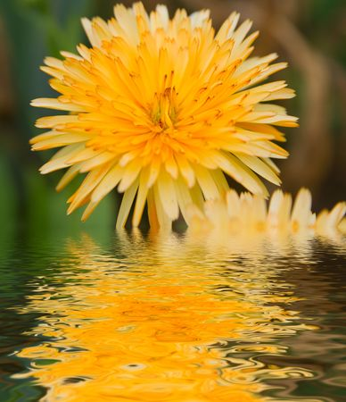 Flowers in a garden with reflection Stock Photo - 522951