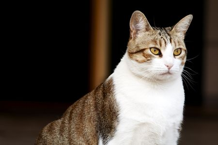 really: Really big and fat cat