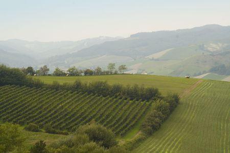 cabernet: Small Italian Cabernet vineyard