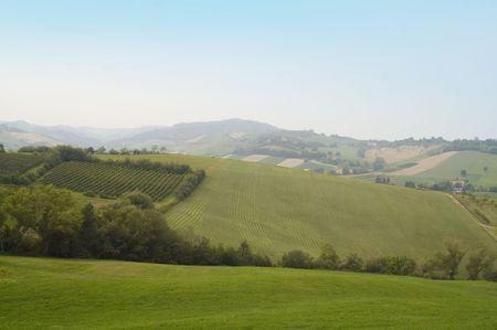cabernet: Small Italian Cabernet vineyard on the hills Stock Photo
