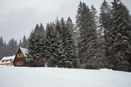 ski, sky, slope, snow, spruce, tree, trees, white, winter    photo
