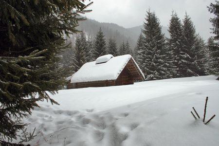 ski, sky, slope, snow, spruce, tree, trees, white, winter   Stock Photo - 567359