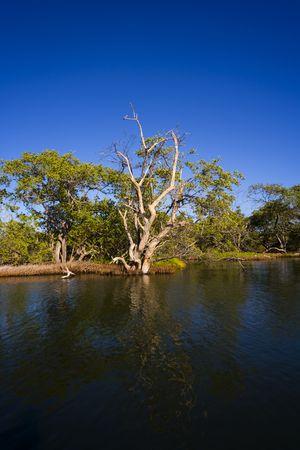 Laguna de le Restinga, Venezuela, rivieren, kanalen, game reserve Stockfoto