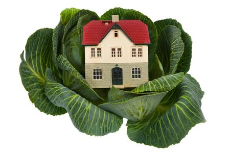 house in cabbage isolated on white
