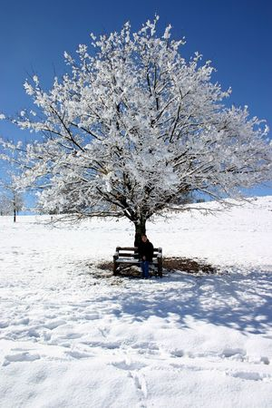 Woman sitting under snow covered tree