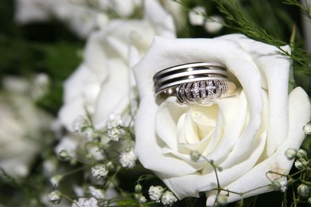 Wedding rings in a white rose