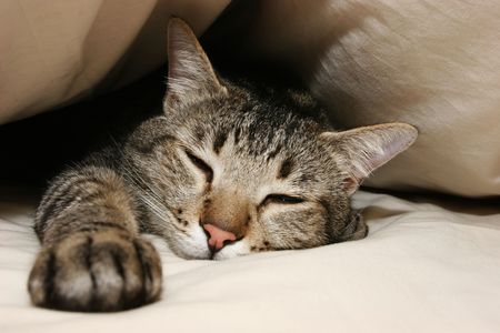 Taking a break from chasing mouse�s all night long Stock Photo