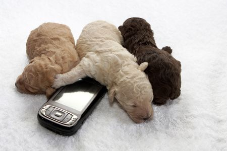 Three little puppy sleeping close to a cell phone photo