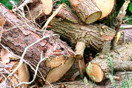 sawn: Pile of sawn logs waiting to be chopped