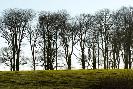 copse: A stand of trees in winter above Cadover, Dartmoor, Devon, England Stock Photo