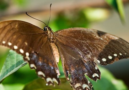 Butterfly Restnig On Leaf photo