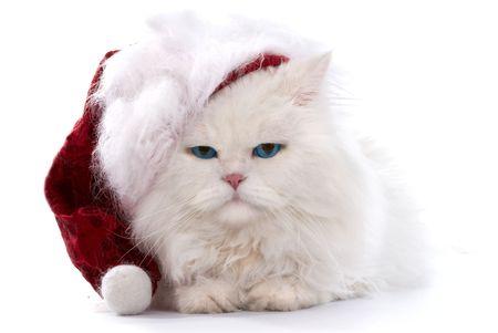 amusant: Amusant chat blanc duveteux dans le cap de Santa