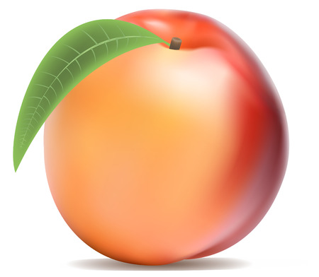 Ripe peach with a green leaf on white background Illustration