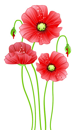 Red poppy flowers.  Stock Vector - 6921707