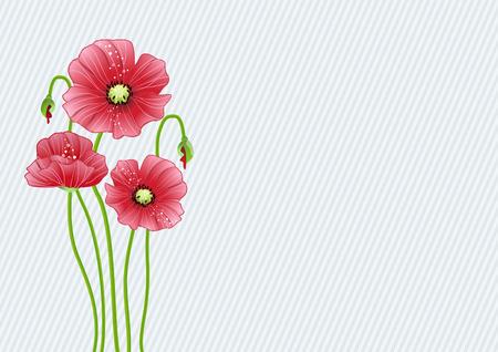 Red poppy flowers. Vector