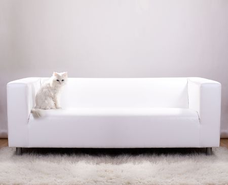 Cat sitting on a white leather sofa photo
