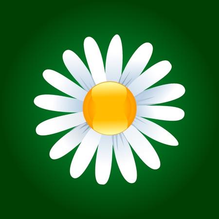 daisy vector: Daisy flower on a dark green background. Vector illustration